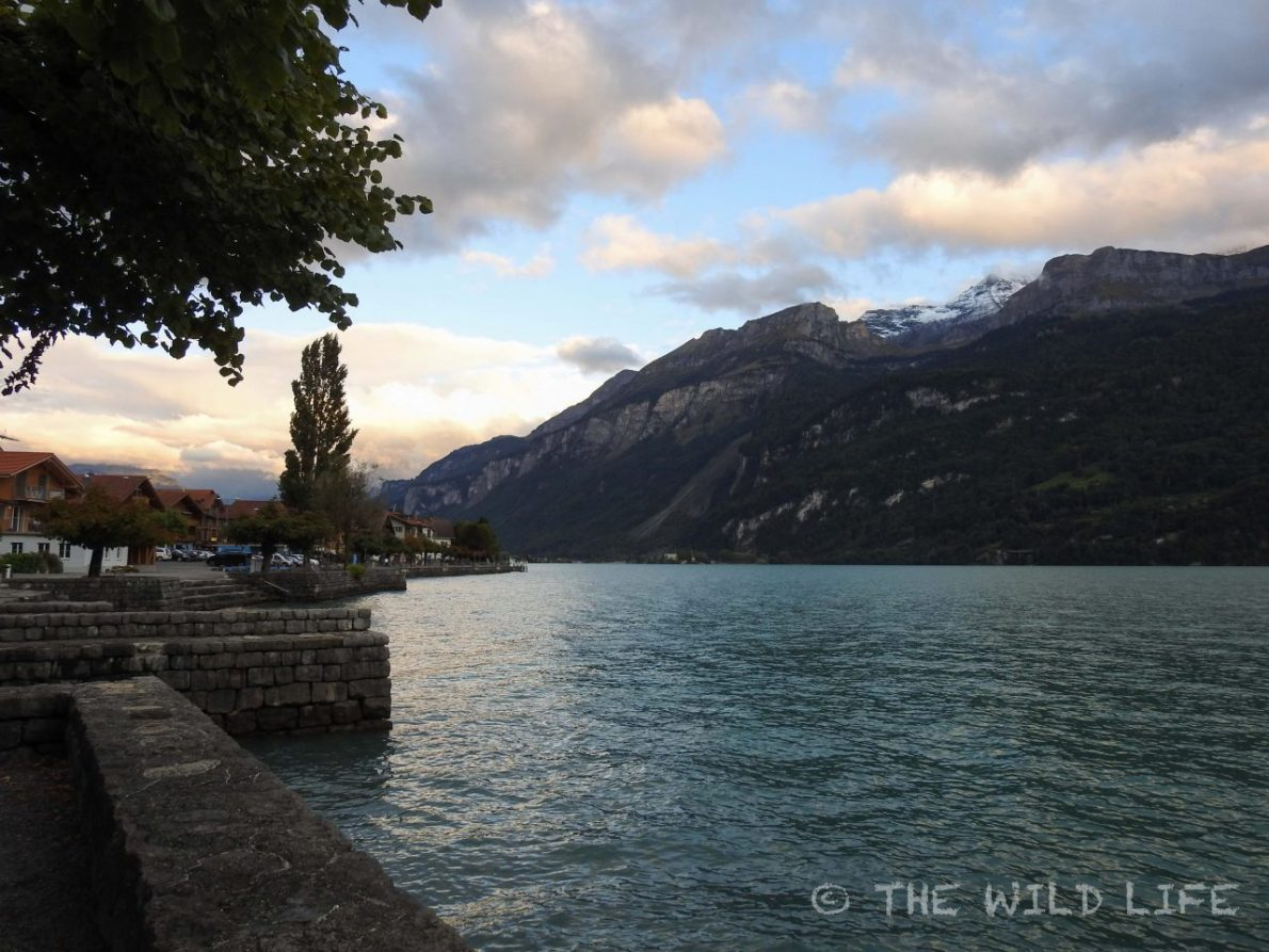 Lake Brienz Switzerland