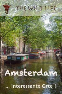 Ich wollte immer schon mal ein Hausboot mieten. Amsterdam wie eine Holländerin erleben und das Venedig des Nordens entdecken. Mit dem Fahrrad durch Amsterdam mit Kindern, interessante Orte erforschen und auf dem Wasser schlafen. Während der Tulpenblüte in Holland verweilen, etwas nervös das erste Mal einen Coffeeshop besuchen, um am Abend scheu den Blick auf die Damen hinter den Schaufenstern im Rotlichtviertel Amsterdam, Adresse De Wallen, zu werfen. Hier findest du geheime Ecken in Amsterdam. Sehenswürdigkeiten, junge Leute - Treffpunkte. Bars und Restaurants in Amsterdam. Unterkünfte und Hausboot mieten: Beispiele. Ich beantworte Fragen wie: Wo kann man in Amsterdam günstig übernachten? Was kann man in Amsterdam machen? Welches ist die beste Grachtenfahrt, Amsterdam? Wo kann man günstig parken? Amsterdam Insider Tipps: Dein bester Reiseführer, Amsterdam: Sehenswürdigkeiten Karte - Holländisches Venedig vom Besten: mit dem Holland Pass vergünstigte Attraktionen hier bestellen. #amsterdaminteressanteorte #sehenswürdigkeitenamsterdam #iamsterdam
