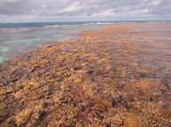 Double rimmed leeward reef-crest