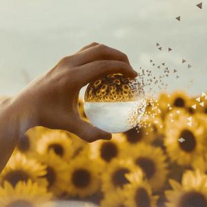 glass ball photoshop photography