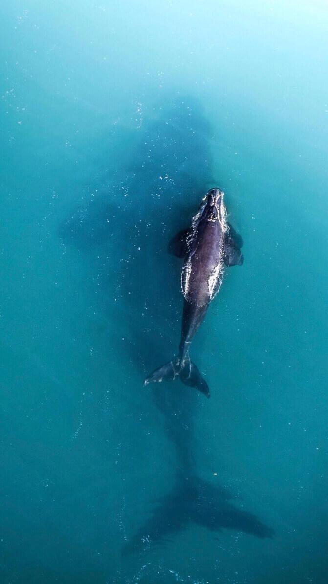 Airloft Drone Whales Photos