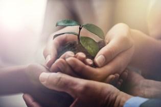 Nurturing corporate growth