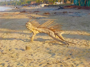 This found and slightly embellished sculpture graced the beach.