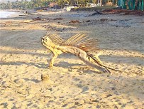 Then, not much further down the beach, I saw what seemed to be a beautiful sculpture of an iguana.