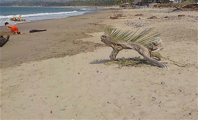 A few days later when I walked down the beach again, I discovered that someone had replaced the former dried frond with a new green one.