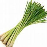 Spezie Lomongrass