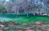Agua pestilente invade terrenos debido a una granja porcícola en Kinchil, denuncian