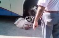 Autobús de Noreste atropella a un viejito: Le destroza un brazo y un pie, en Tizimín
