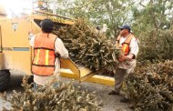 Instalarán 12 centros de acopio para llevar a tirar árboles naturales