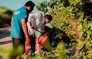 Inicia el saneamiento de residuos sólidos en los manglares de la Costa Norte de Yucatán
