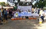 Comienza la campaña antirrábica en Oxkutzcab, de perros y gatos