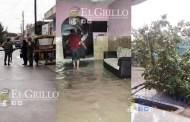Una turbonada derriba árboles e inunda casas en Celestún