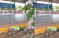 """Se durmió y nunca despertó: murió debajo de un árbol de la """"Serapio Rendón"""""""