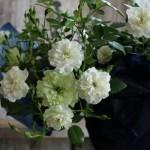 ミニバラ・グリーンアイスの魅力を引き出す!白色テーマの寄せ植え