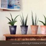 モスポットは植物に寄り添う優しい鉢