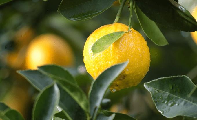 レモンのイメージ