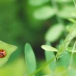 植物が病気になるってどういう事?病害虫の原因に合わせた予防と対策