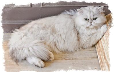 определение геопатогенных зон в квартире котом
