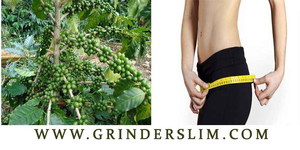 Green coffee per dimagrire