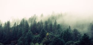30 GIS Applications in Forestry