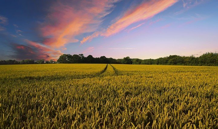 12 Applications of remote sensing in Crop Monitoring