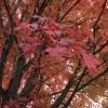 グリネルの秋