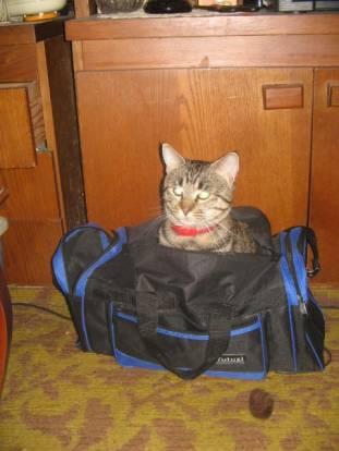 geanta e a mea