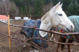 Horse Vacation BC