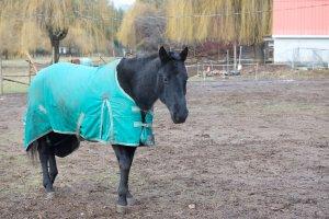 Horse EFL