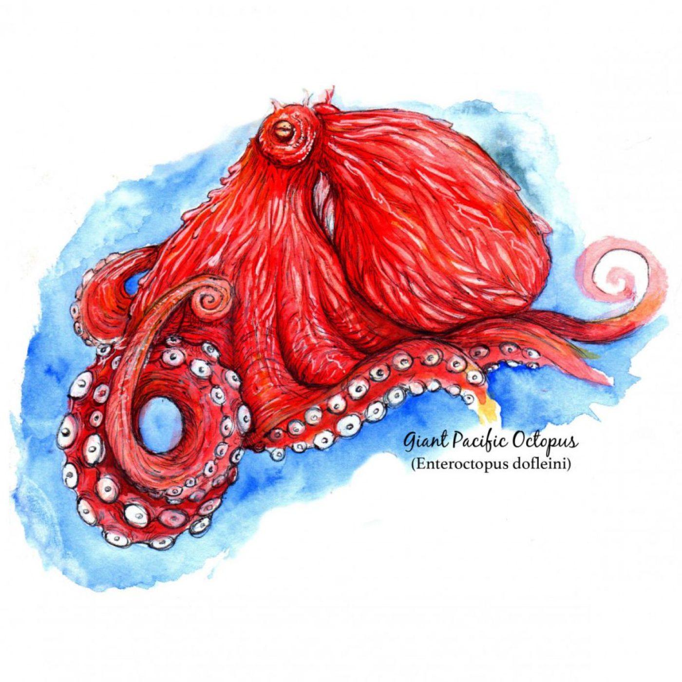 Tacoma narrows octopus 1