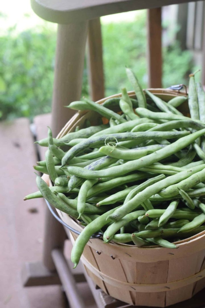 Bushel of Green Beans on rocking chair.JPG