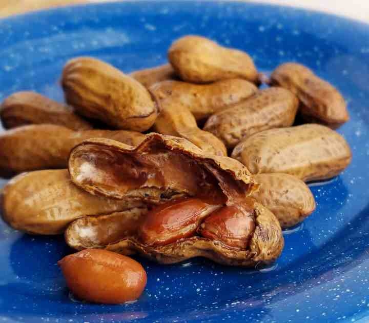 Boiled peanuts made in the Instant Pot, cracked open on a blue tin plate