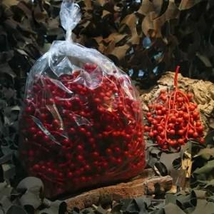 Baies rouges plastique