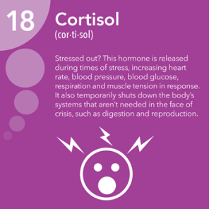 cortisol information