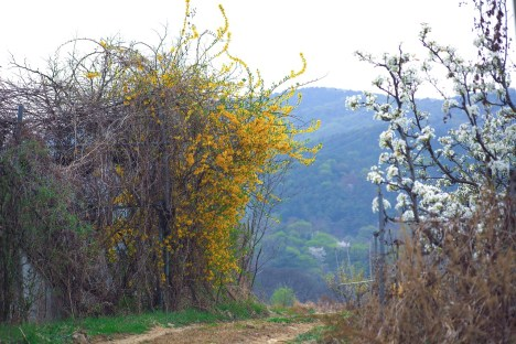 forsythia bush tackle your fears