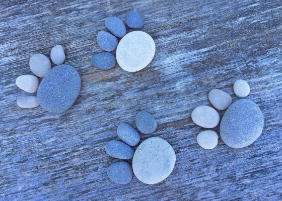 pet paw prints