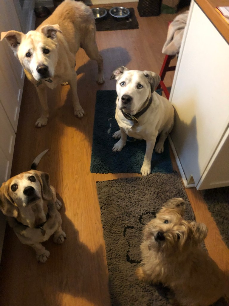 Dogs wait for their morning routine walk