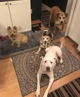a turning point - four dogs in one home