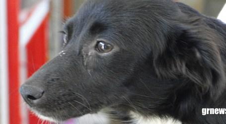 Campanha vacinará cães e gatos contra a raiva na zona rural de Pará de Minas. Veja a programação