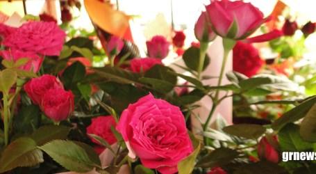 COVID-19 pode causar falência de 66% dos produtores de flores e de plantas ornamentais