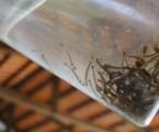 Pará de Minas tem mais de três mil notificações de Dengue; MG supera 74 mil casos da doença e seis mortes