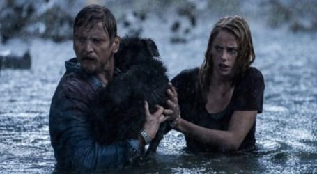 Cine News: Predadores Assassinos