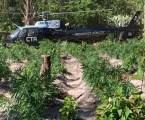 Polícia Federal destrói plantação com mais de 350 mil pés de maconha no Maranhão