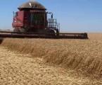 Produções de trigo, café e cana-de-açúcar caem e agronegócio deve crescer menos em 2021