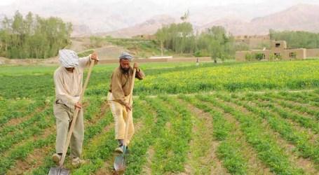 ONU diz que 87% do valor de subsídios agrícolas distorce preços e é nocivo ao ambiente