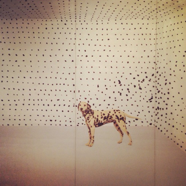 Dalmatian world