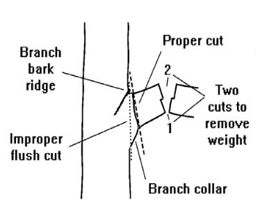 3 cut method NFS (2).png