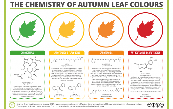 Chemistry-of-Autumn-Leaves-2017-700x441