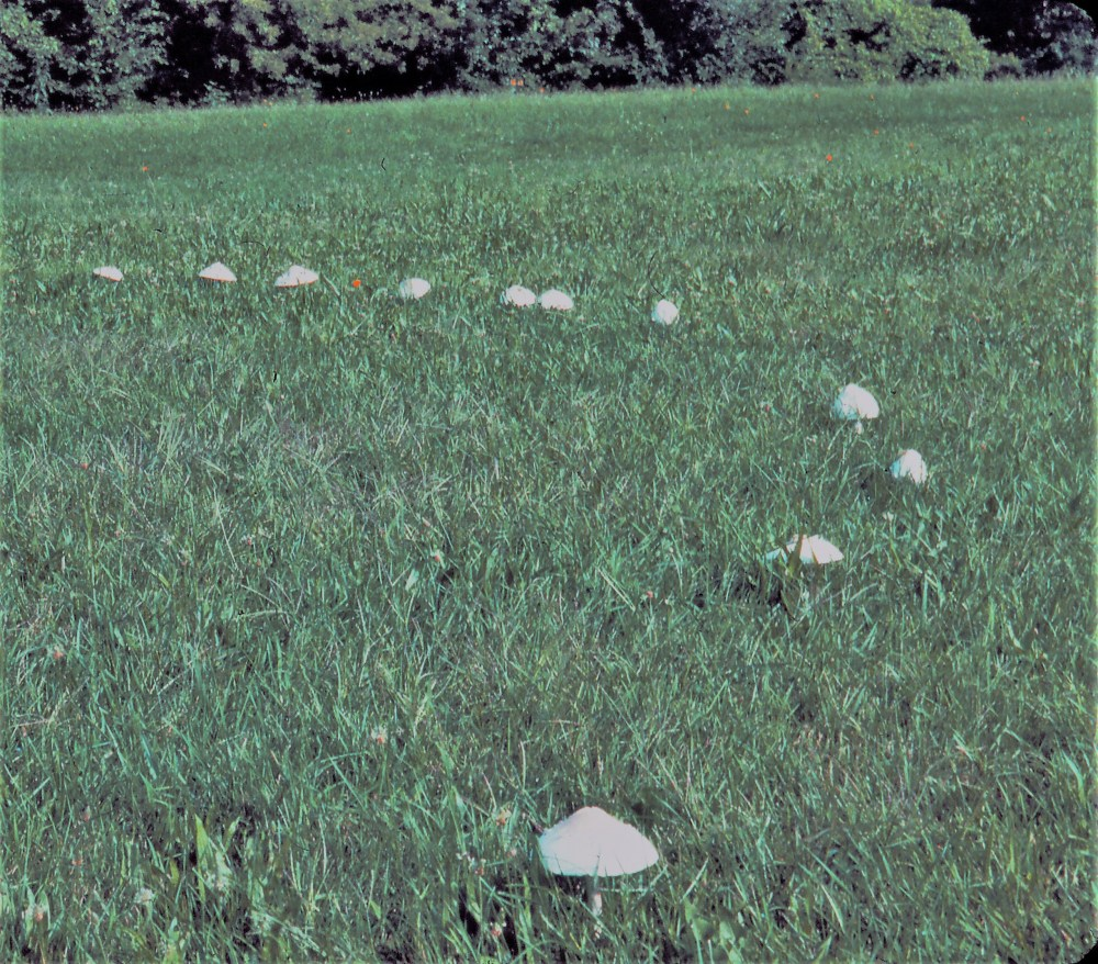 FairyRingB tom weber