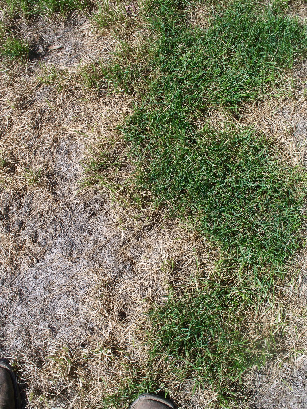 matted turf brian strauch (2).jpg